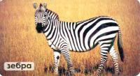 Мир на ладошке удивительные животные