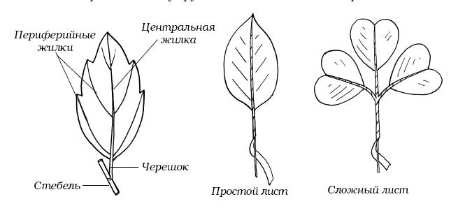 Каллы из солёного теста - MirTesen ru