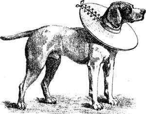 Чтение книги (Болезни собак. Краткое руководство. Наружные болезни). Георг Мюллер. Страница #17