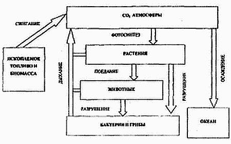 Основы общей экологии (fb2) |