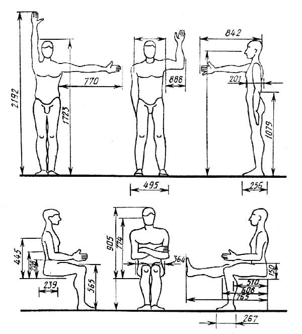 соотношений размеров тела