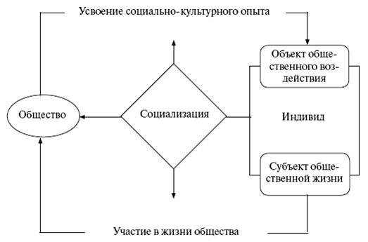 Strukturtypen der Ruhekerne von Pflanzen und Tieren