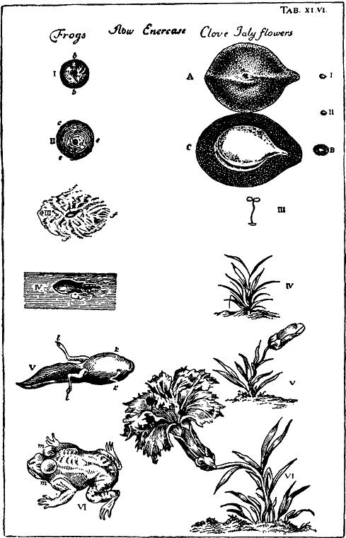 Гомункулус (fb2) | Либрусек