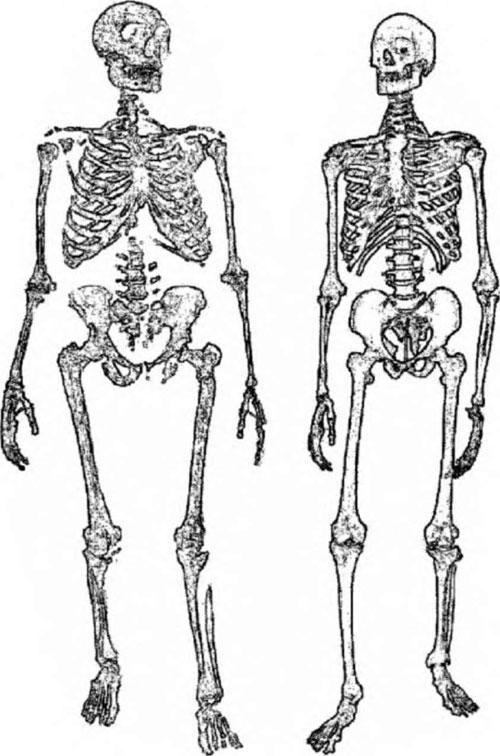 Неандертальцы: история
