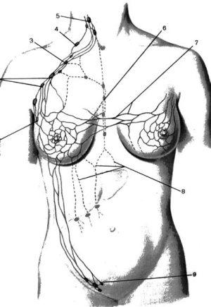 молочной железы (схема).