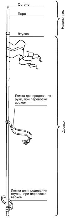Схема строения древкового
