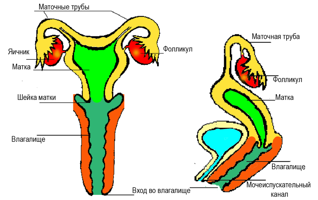 Сперматурия фото