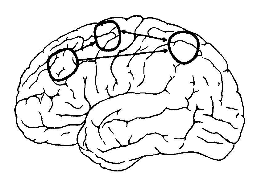 Кругами обведены области мозга