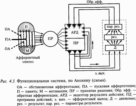 Функциональная система, по Анохину (схема) .