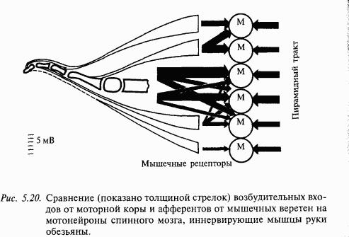 Вопросы.  4. Обработка зрительных сигналов в ассоциативных полях коры.  2. Схема зрительной системы человека.