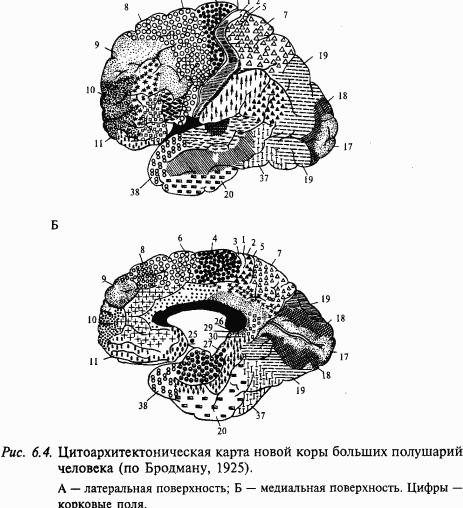 Основы нейрофизиологии (fb2) |
