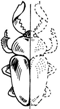 Как сделать в домашних условия легкий пенал