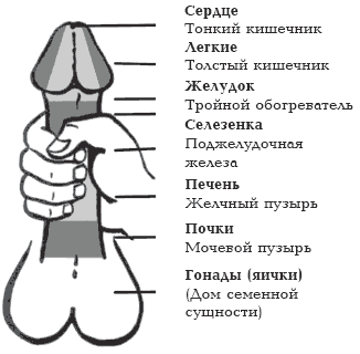 Анальная мастурбация - ЧУВАКИ.COM