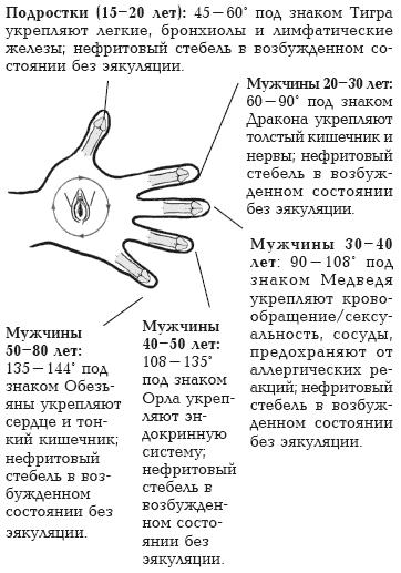 Во время эякуляции все перечисленные органы, семь желез и эрекция
