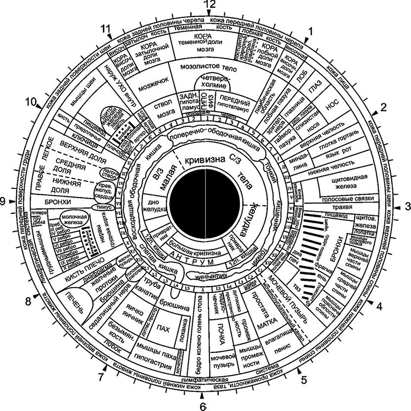 Схема проекционных зон радужки
