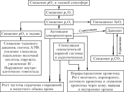 Экология человека (fb2) |