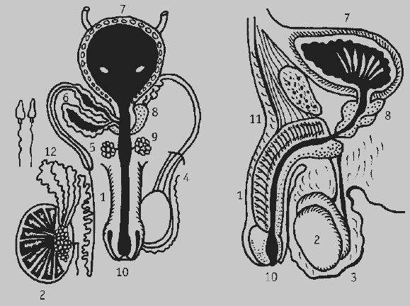 glina-i-lechenie-prostatita