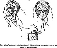 вредные паразиты в организме человека