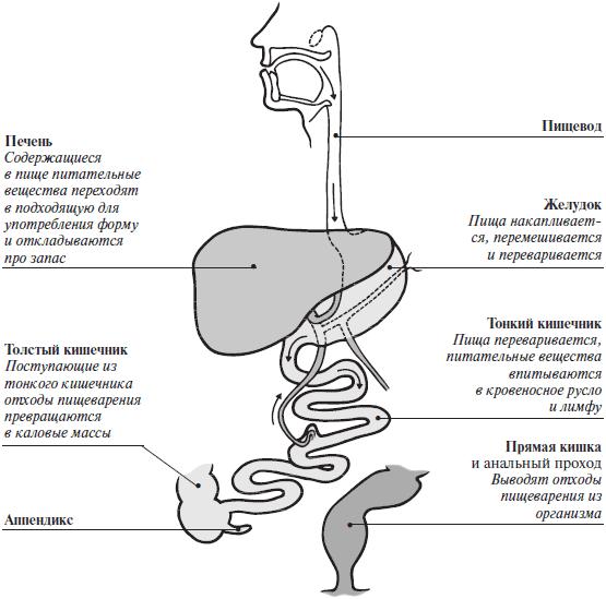 Большая книга о здоровье (fb2)