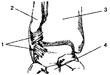 Влажные мозоли на пальцах ног лечение