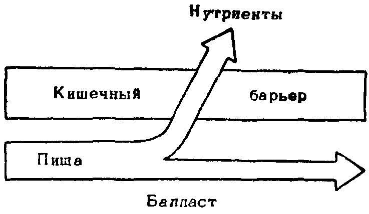 Схема потоков веществ из