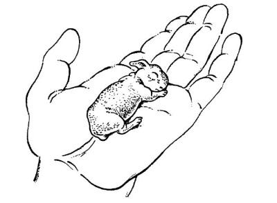 все о кроликах разведение содержание уход практическое руководство - фото 6