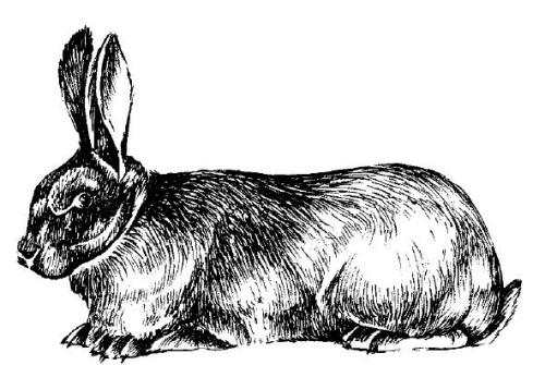 все о кроликах разведение содержание уход практическое руководство - фото 10