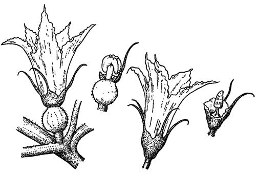 Занимательная ботаника (fb2) |