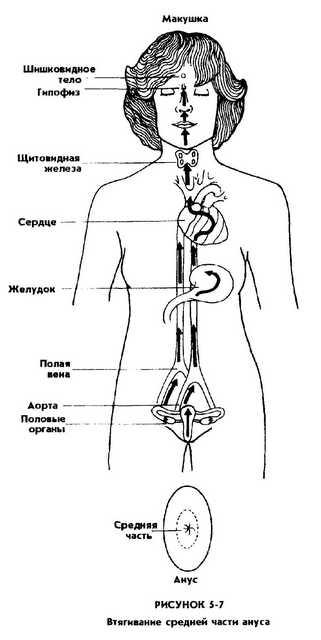 zhenskoy-seksualnoy-energii-mantek-chia