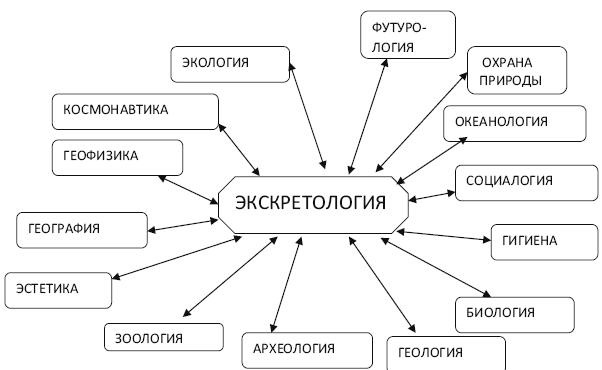 Схема связей экскретологии с