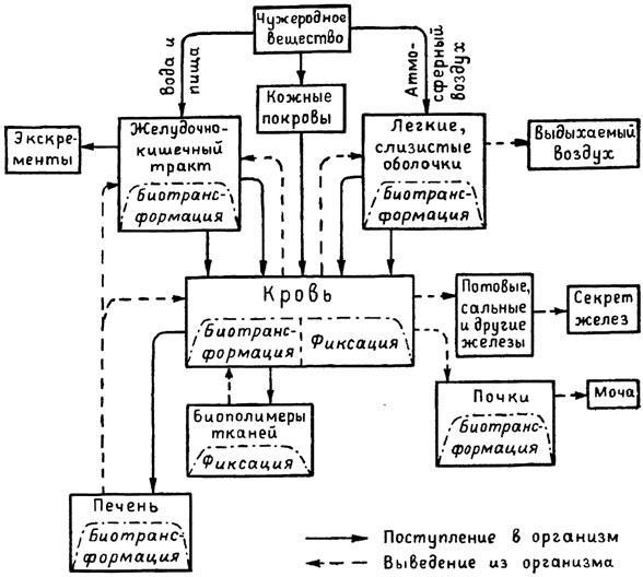 Общая схема поступления