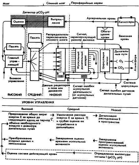 Мозг фирмы (fb2) | Либрусек