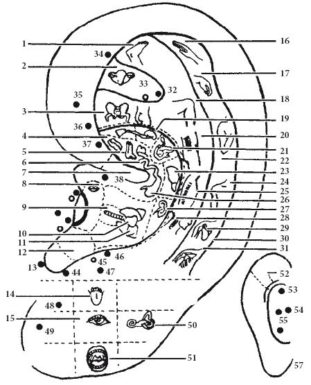 органов на ушной раковине: