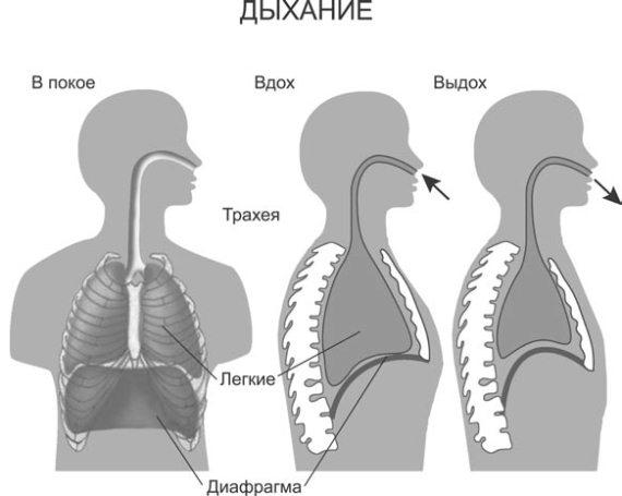 Схема процесса дыхания.