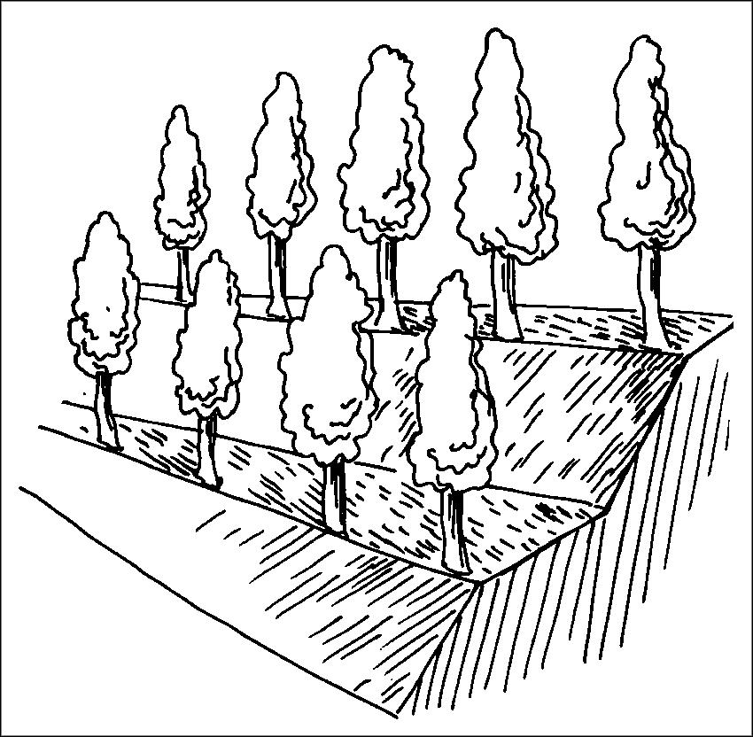 Рис. 1. Сад на террасах