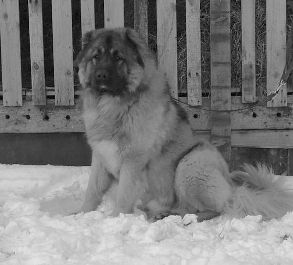 Ветеринарный справочник для владельцев собак _01