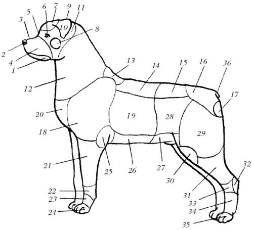 Ветеринарный справочник для владельцев собак _02