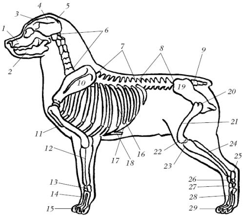 Ветеринарный справочник для владельцев собак _04