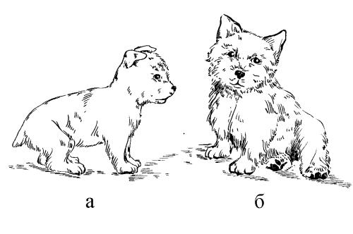 Ветеринарный справочник для владельцев собак _27