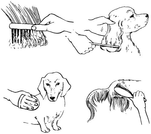 Ветеринарный справочник для владельцев собак _41