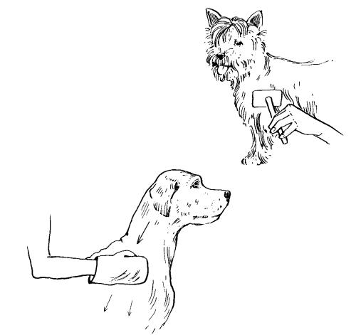 Ветеринарный справочник для владельцев собак _42