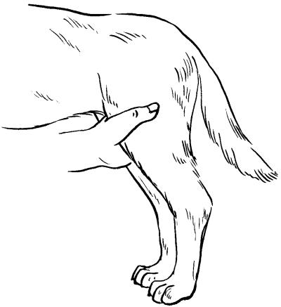 Ветеринарный справочник для владельцев собак _53