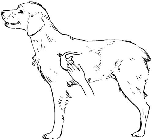 Ветеринарный справочник для владельцев собак _54