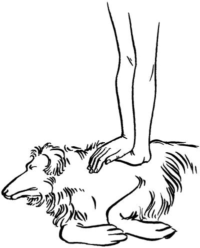 Ветеринарный справочник для владельцев собак _58