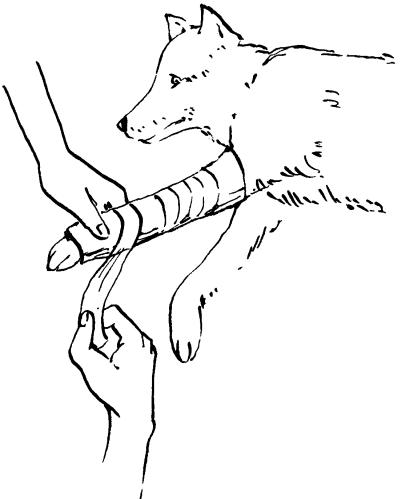 Ветеринарный справочник для владельцев собак _60