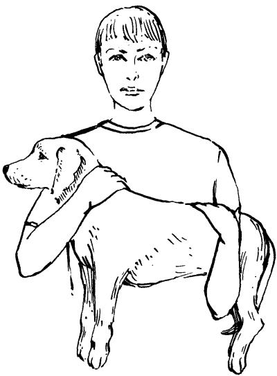 Ветеринарный справочник для владельцев собак _65