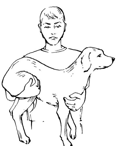 Ветеринарный справочник для владельцев собак _66