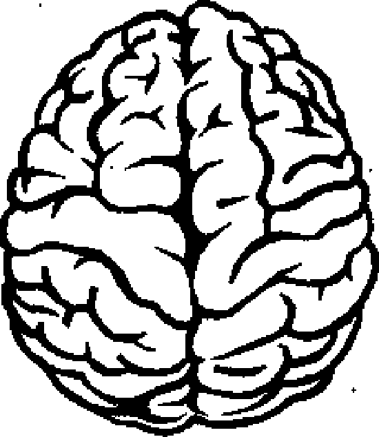 Рис. 2. Два полушария мозга (вид спереди ...: lib.rus.ec/b/261351/read