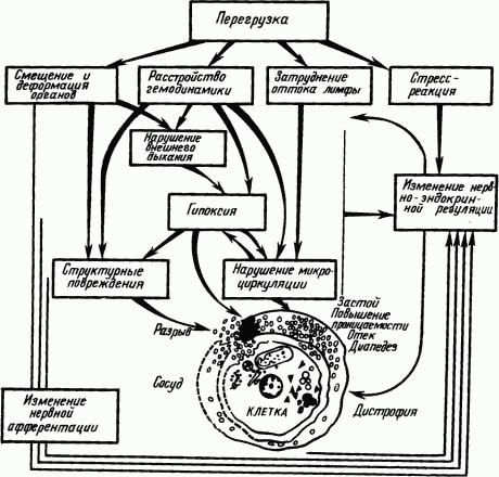 Основы физиологии высшей