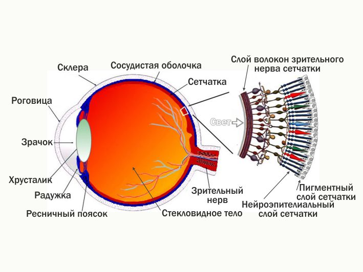 Почему наш глаз сделан так?